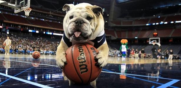 Cachorro 'basqueteiro' na Universidade de Butler