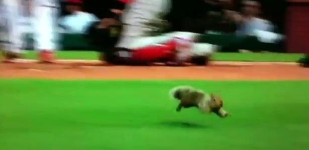 Esquilo invade o campo em jogo da MLB