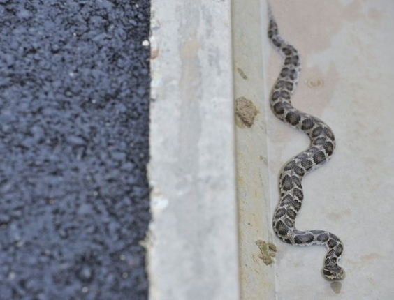 Sob forte chuva e com a pista encharcada, cobra é vista na beira do asfalto no circuito de Yeongam, na Coreia do Sul