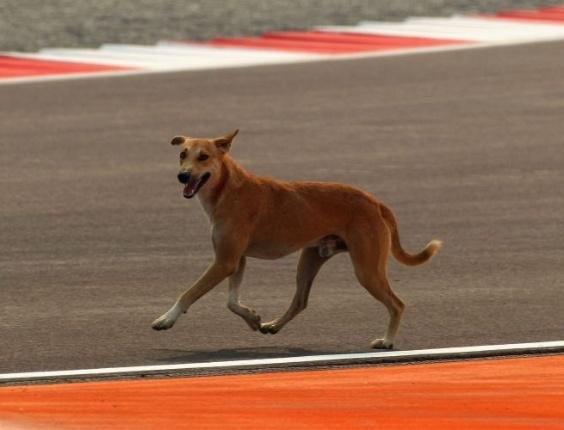 Cachorro passeia pela pista de Buddh (28/10/2011)