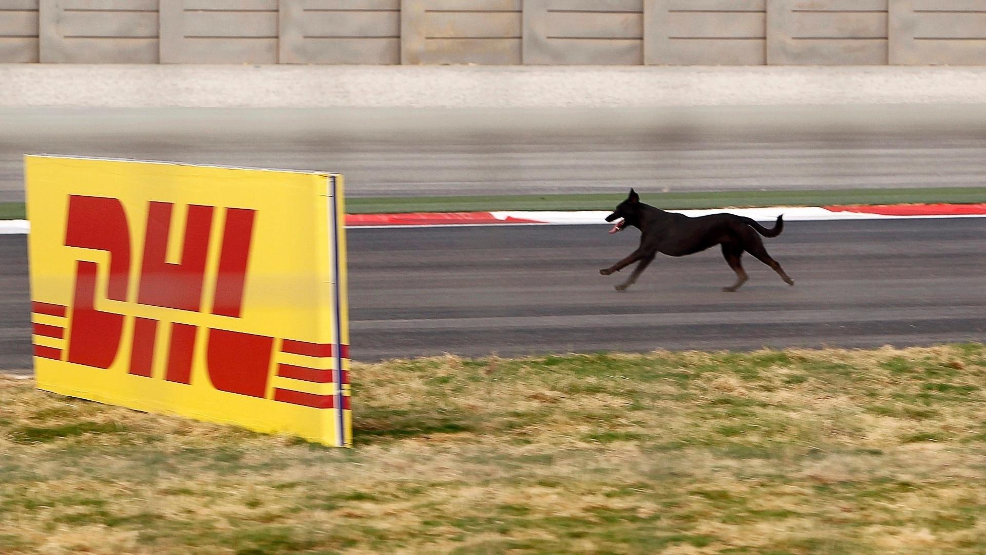 Grande Prêmio da Índia de 2011 foi marcado pela invasão de cachorros na pista