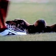 9014bcb1bb452 Durante a partida entre Deportivo Pereira e Junior Barrinquila, a bola  acertou uma coruja, que estava no campo. Sem mostrar compaixão com o pobre  bicho, ...