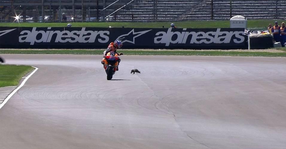 Casey Stoner desvia de animal na pista durante os treinos para a etapa de Indianápolis da MotoGP